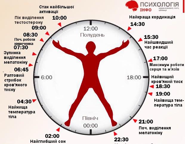 біологічний годинник2