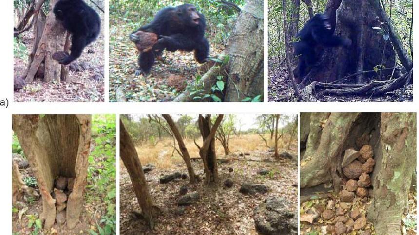 Шампанзе