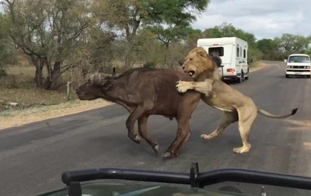lion_sar