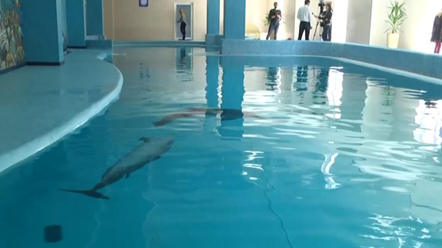 delfinyi-truskavets