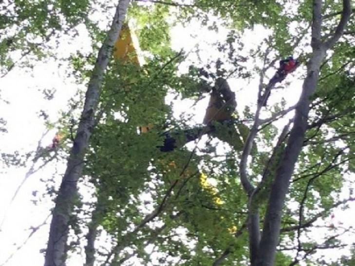 пілот на дереві