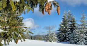 зима погода