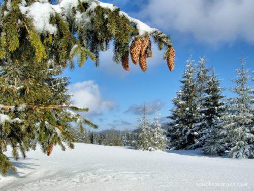 Погода в солдато-александровском на три дня