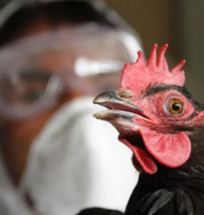 ptashynyj-gryp